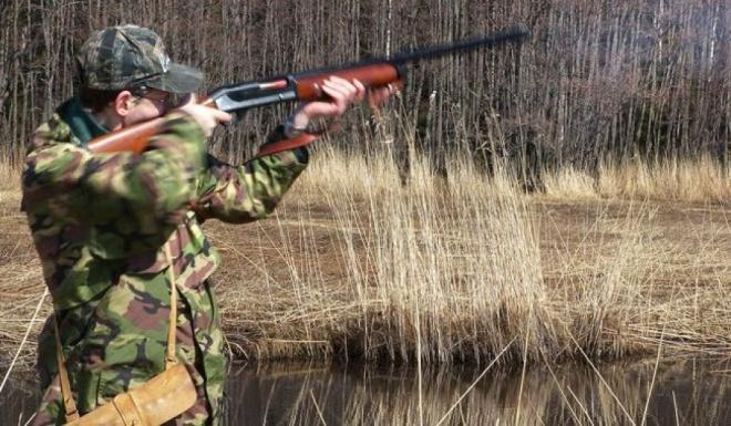 ВПачелмском районе охотнику набобра грозит штраф