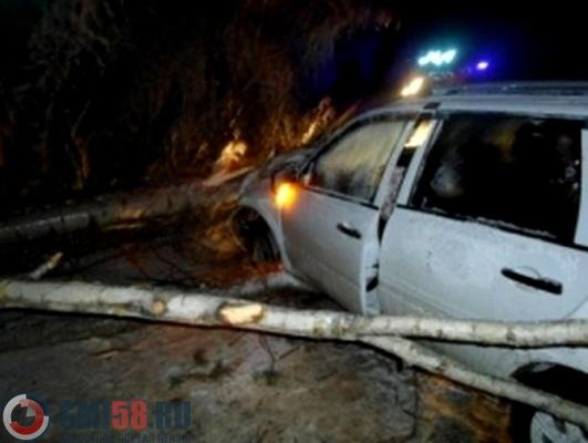 ВПензенской области дерево раздавило машину слюдьми