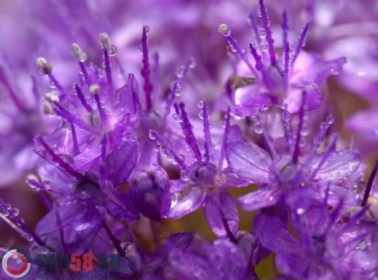 Сегодня вовсем мире проводят Фиолетовый день